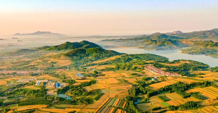 壮观!青岛西海岸新区35万亩麦田收获忙