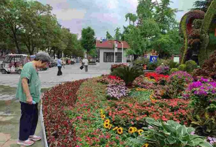 济宁街头立体花卉造型 花开烂漫