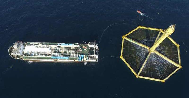 吃货福利!首批国产深远海三文鱼在青岛上岸