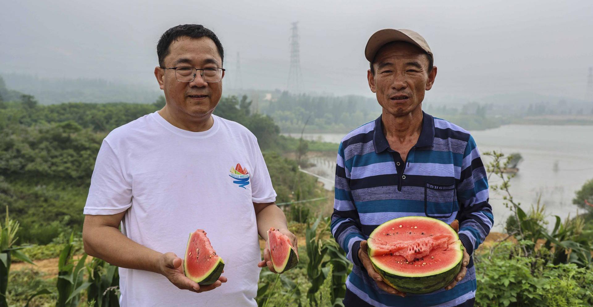 喜获大丰收 快来看看这是谁家的西瓜这么甜?