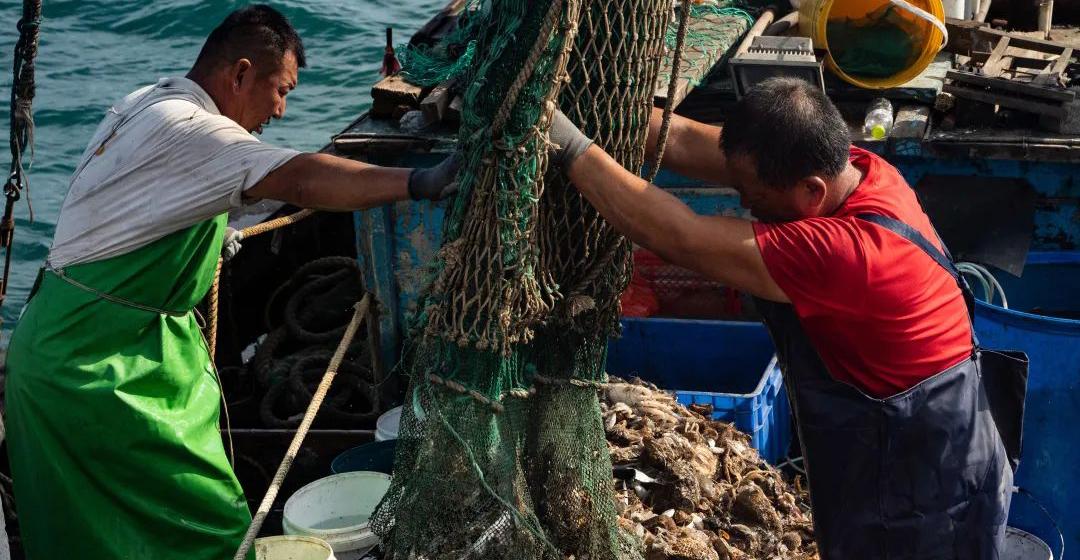 青岛渔帮:解开渔网绑绳的一刻犹如开盲盒