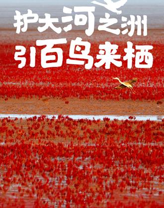 闪电海报丨厚植生态底色 绘就黄河流域高质量发展齐鲁画卷