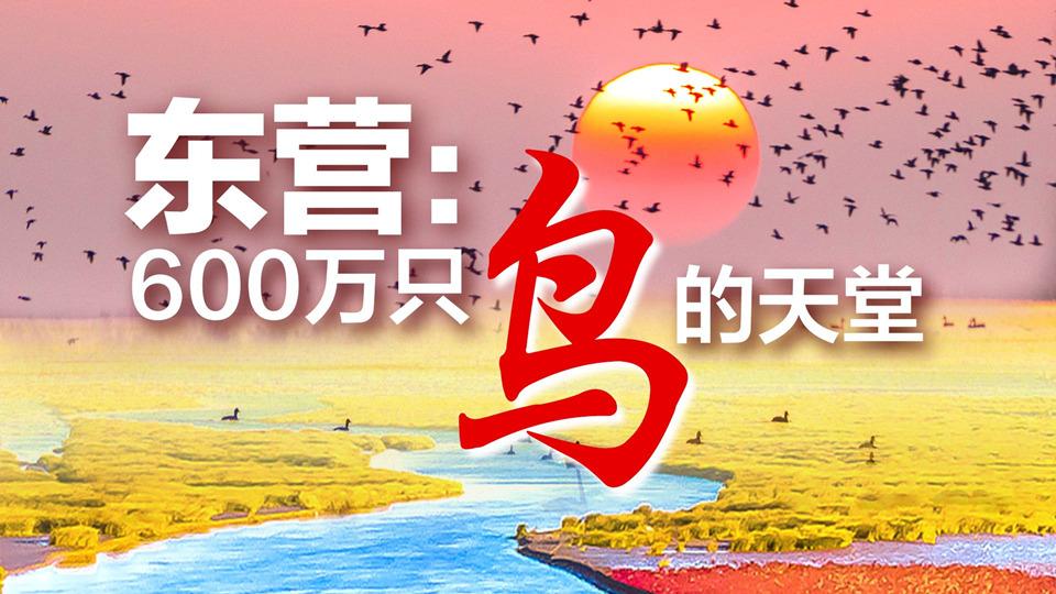 记者探访600万只鸟的天堂——东营黄河口