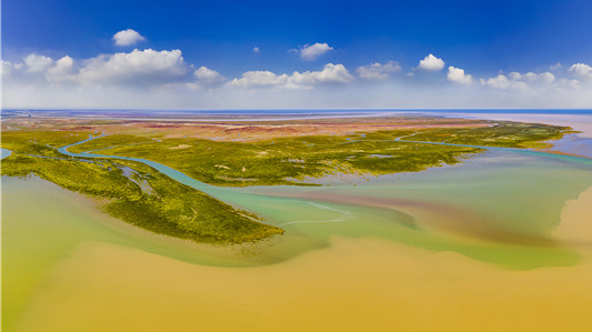 黄河入海口的美、奇、特