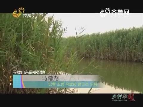 寻找山东最美湿地:马踏湖