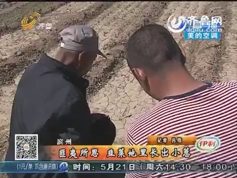 滨州:匪夷所思 韭菜地里长出小葱