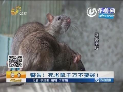 烟台:警告!死老鼠千万不要碰!
