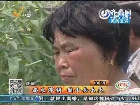 济南:西瓜滞销 因个头太大