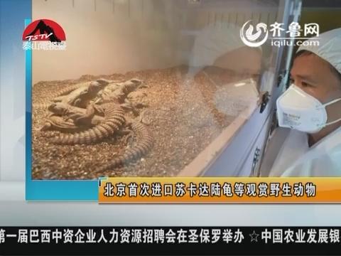 图片新闻:北京首次进口苏卡达陆龟等观赏野生动物