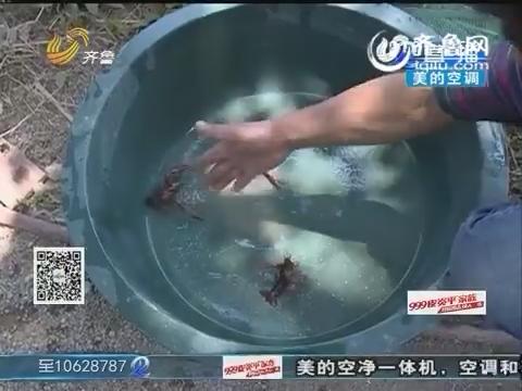 济阳:飞机喷洒农药飞过 小龙虾离奇死亡?