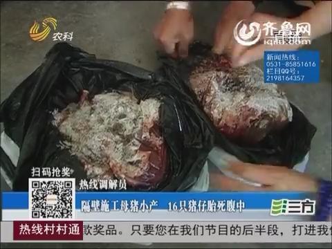 【热线调解员】东营:隔壁施工母猪小产 只猪仔胎死腹中
