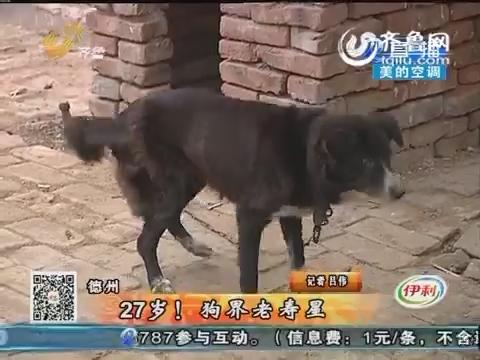 德州:27岁!狗界老寿星