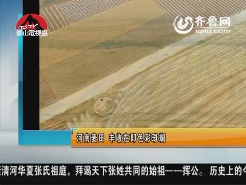 图片新闻:河南麦田 丰收在即色彩斑斓