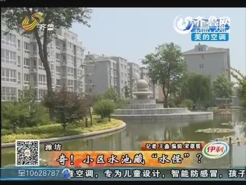 """潍坊:奇!小区水池藏""""水怪""""?"""