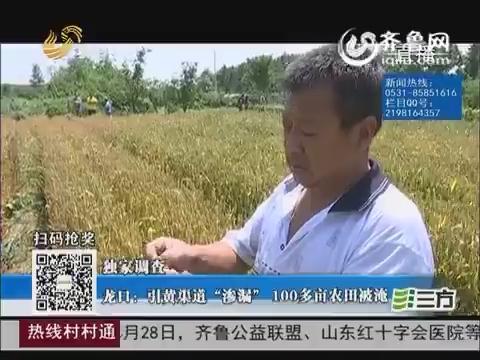 """【独家调查】龙口:引黄渠道""""渗漏"""" 100多亩农田被淹"""