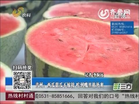 青州:西瓜甜瓜不嫁接 吃到嘴里格外爽
