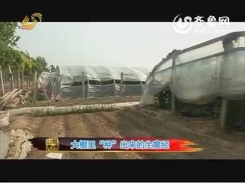 """20160613《品牌农资龙虎榜》:大棚里""""种""""出来的生意经"""
