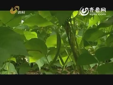20160614《品牌农资龙虎榜》:芸豆大棚里的烦恼