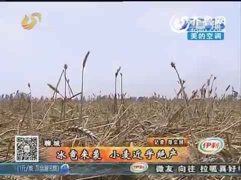 聊城:冰雹来袭 小麦受灾严重