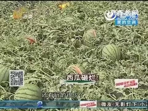 济阳:冰雹从天而降 数百亩西瓜砸开花