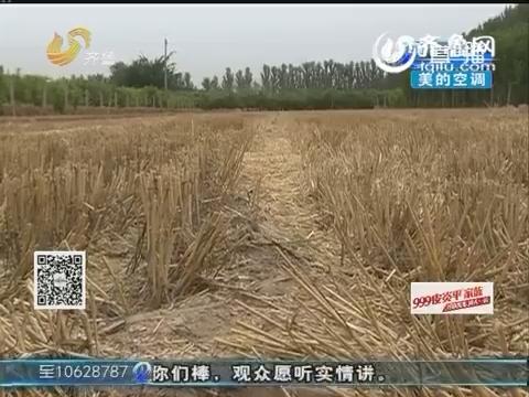 冠县:成熟麦子一夜之间不翼而飞
