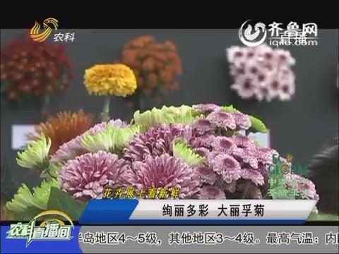 20160617《农科直播间》:花卉展上看新鲜——绚丽多彩 大丽孚菊