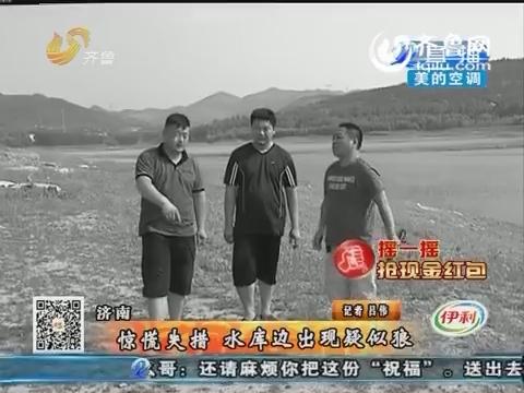 济南:惊慌失措 水库边出现疑似狼