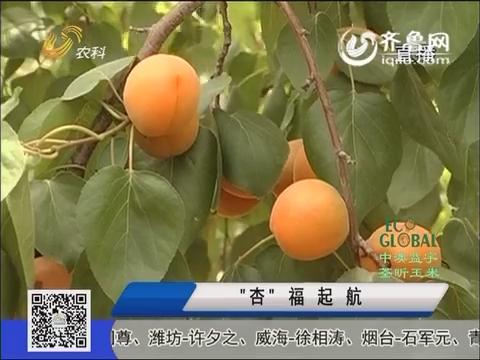 """20160620《农科直播间》:""""杏""""福起航"""