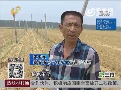【独家调查】东平:建蔬菜大棚被叫停 得先办证?