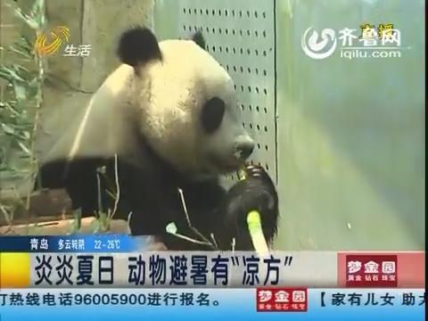 """济南:炎炎夏日 动物避暑有""""凉方"""""""