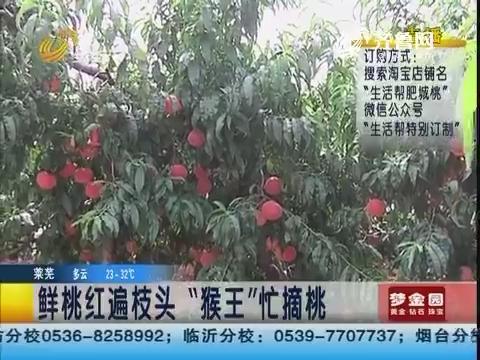 """肥城:扮美猴王 阿速""""大闹""""中央桃行"""