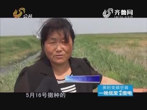 20160709《真相力量》:滨州——氯化物超标的水稻田