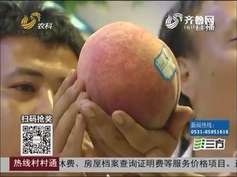 """蒙阴:""""桃王""""来了 一个桃子卖出两千块"""