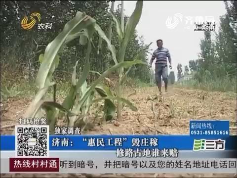 """【独家调查】济南:""""惠民工程""""毁庄稼 修路占地谁来赔"""