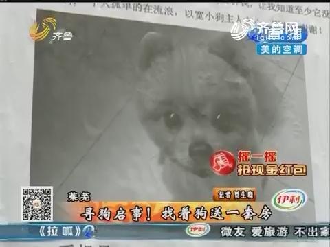 莱芜:寻狗启事!找着狗送一套房