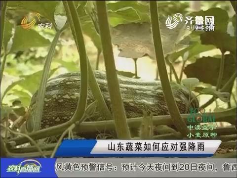20160719《农科直播间》:山东蔬菜如何应对强降雨