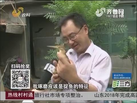 """淄博:家里来""""稀客""""长相够特别"""