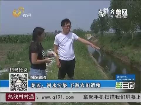 【独家调查】莱西:河水污染 下游农田遭殃