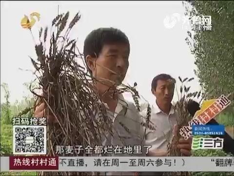 【热线调解员】济阳:拖欠土地承包款 小麦至今未收烂一地