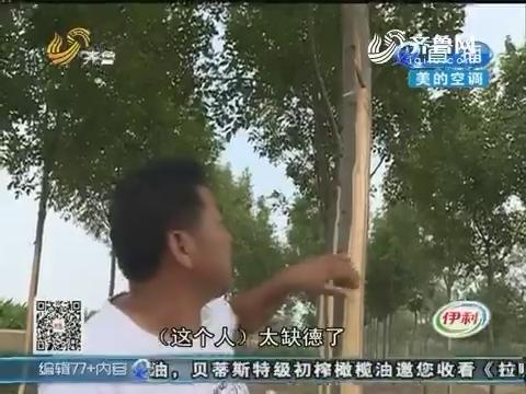 德州:绿化树被人剥皮 损失不小!