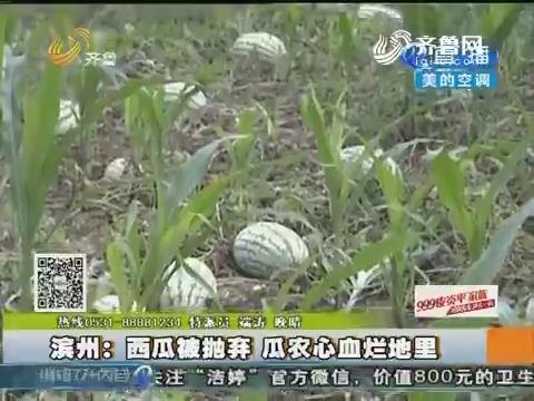 滨州:西瓜被抛弃 瓜农心血烂地里
