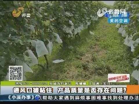 威海:葡萄套袋 葡萄变成葡萄干