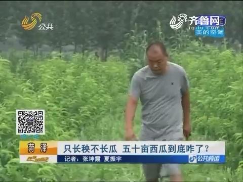 菏泽:只长秧不长瓜 五十亩西瓜到底咋了?