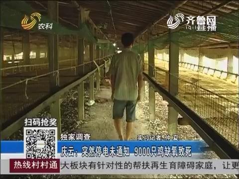 【独家调查】庆云:突然停电未通知 9000只鸡缺氧致死