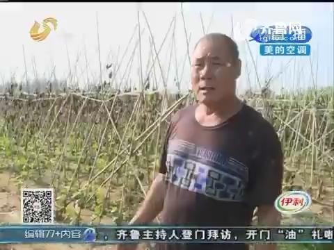 临沂:邻村小青年 当面偷西瓜