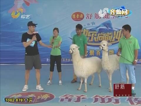 快乐向前冲:驯兽师组合带着羊驼豹子来闯关