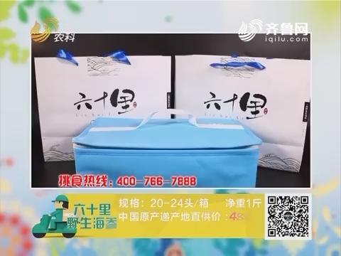 20160826《中国原产递》:六十里野生海参