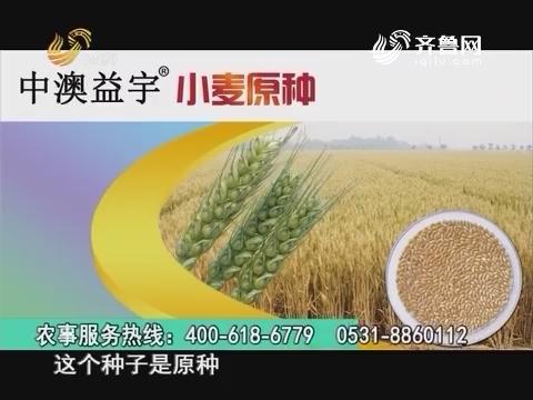 20160826《当前农事》:中澳益宇小麦原种