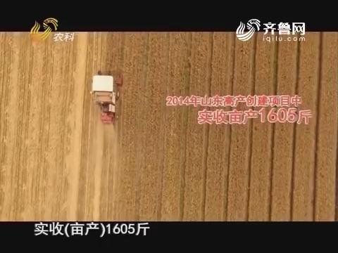 20160827《当前农事》:中澳益宇小麦原种