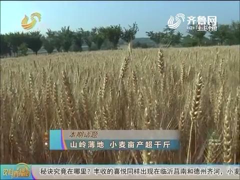 20160830《农科直播间》:山岭薄地 小麦亩产超千斤